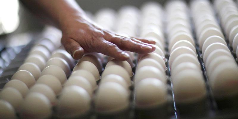 Manipulador De Alimentos – Huevos Y Derivados